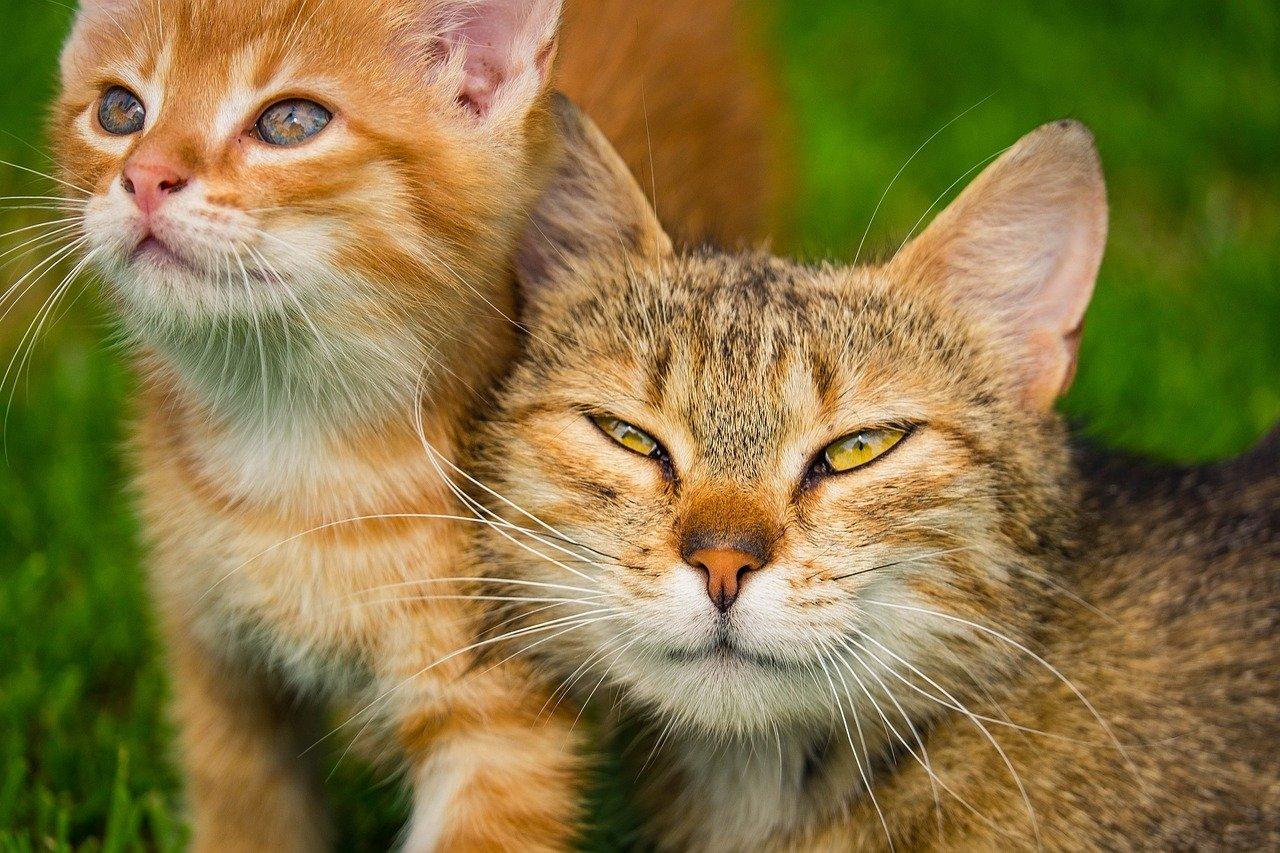 Katzen richtig bespaßen